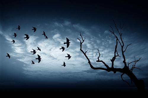 Umut ve Korku: Anka Kuşu'nun Yolculuğu - Yazan: MEHMET AKİF OKUR