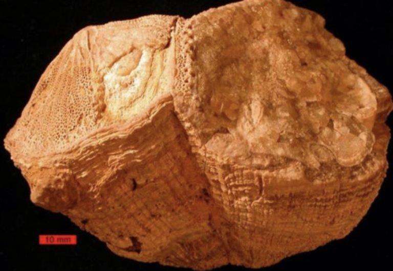 70 Milyon Yıllık Deniz Kabuğu Sayesinde, Günlerin Eskiden 23,5 Saat Olduğu Anlaşıldı!