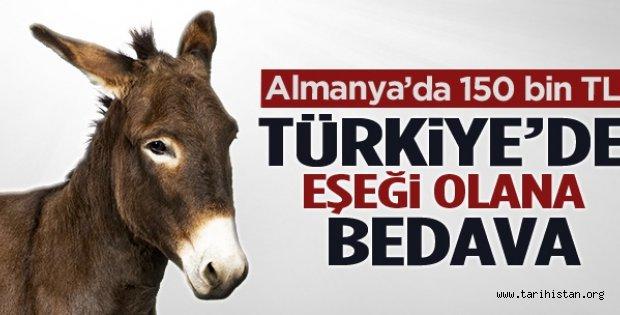 Almanya'da 150 bin lira Türkiye'de eşeği olana bedava