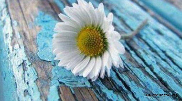 Minik Saksılarda Renkli Çiçekler - Merve AGAR