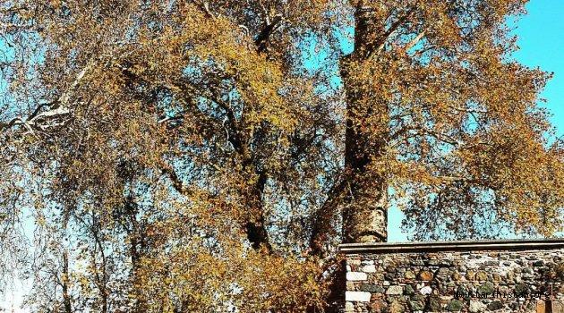 Ulu çınarın gölgesindeki Ulu Cami