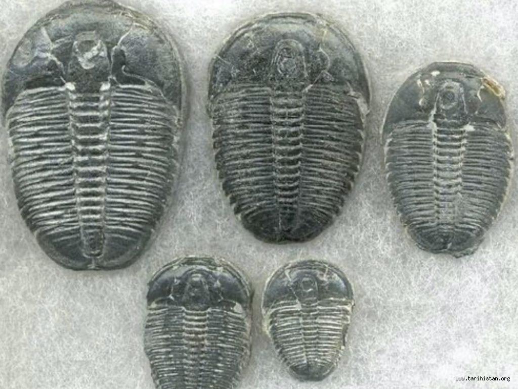 Yüz Milyonlarca Yıl Öncesine Ait Fosilize Ayak İzleri Gizlendi mi?