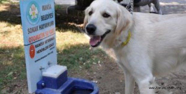 Manisa Belediyesi'nden Hayvanlar İçin Proje