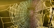 Örümcek Ağı - Necip Fazıl Kısakürek