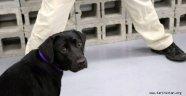 CIA, patlayıcıları koklamayı reddeden köpeği işten çıkardı