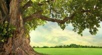 Özgür Çelik Yazdı:-O Ağaç-